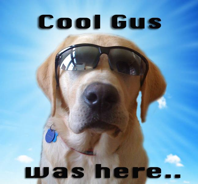 Cool Gus Says: 12 Years In History