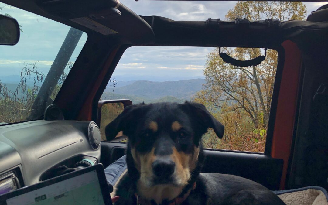 Day 228: 2020 Pandemic. Jeep Wrangler, Scout and a Trip Into The Smoky Mountains
